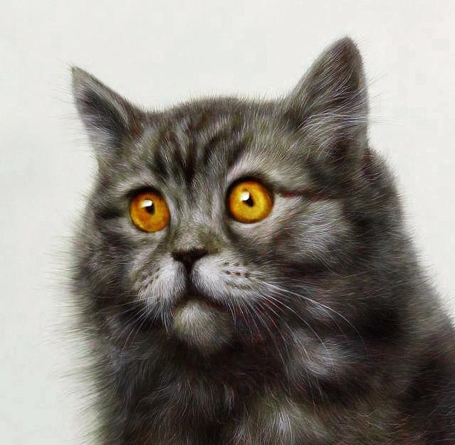 壁纸 动物 猫 猫咪 小猫 桌面 639_626
